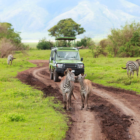 Safari im Ngorongoro-Krater, Tansania