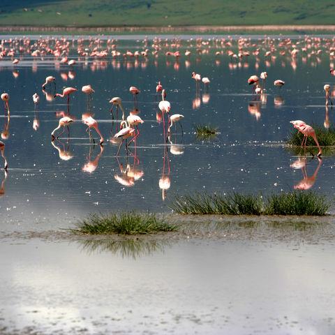 Flamingos im Ngorongoro-Krater, Tansania