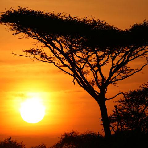 Einzigartig: Sonnenuntergang im Serengeti Nationalpark, Tansania