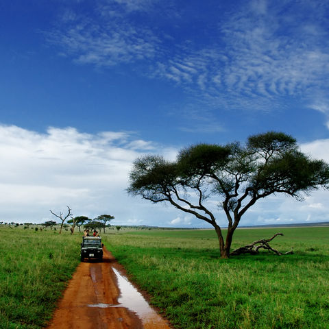Auf Safari im Tarangire Nationalpark, Tansania