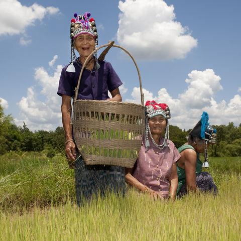 Farmerinnen vom Bergvolk der Akha, Thailand