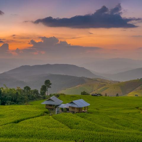 Reisfelder nahe Chiang Mai im Sonnenuntergang, Thailand