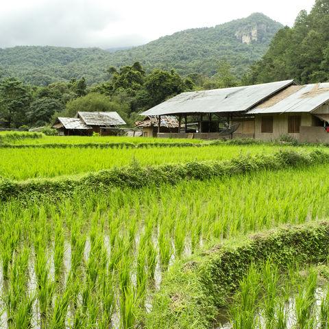Bauernhaus am Reisfeld, Thailand