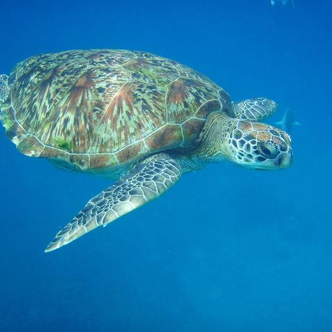 Begegnungen der Unterwasserwelt, Thailand