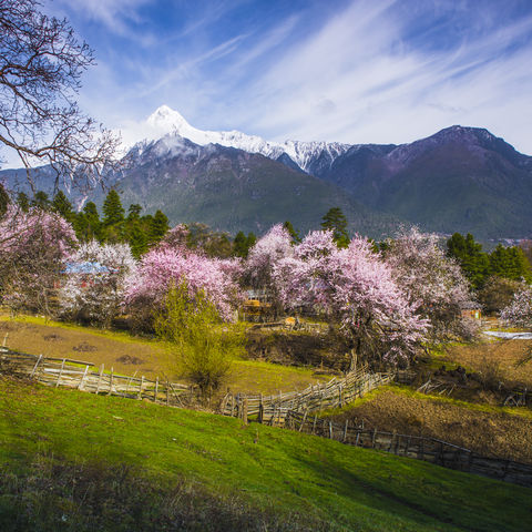 Landschaft im Frühling, Tibet