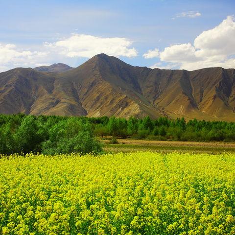 Grüne Berglandschaft um Nyingchi, Tibet