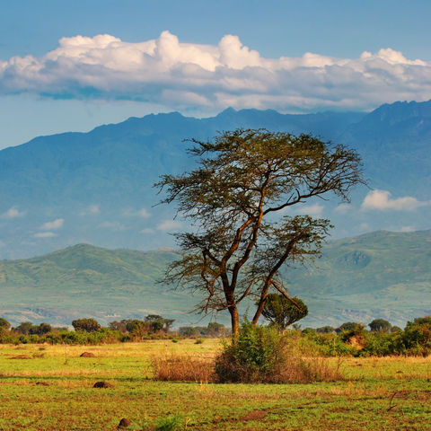 Afrikanische Savanne, Uganda