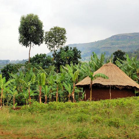 Hütte in den bergigen Höhen von Kapchorwa, Uganda