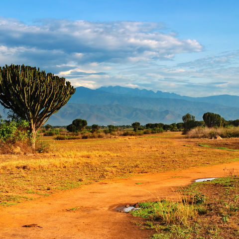 Savannenlandschaft im Queen Elizabeth Nationalpark, Uganda