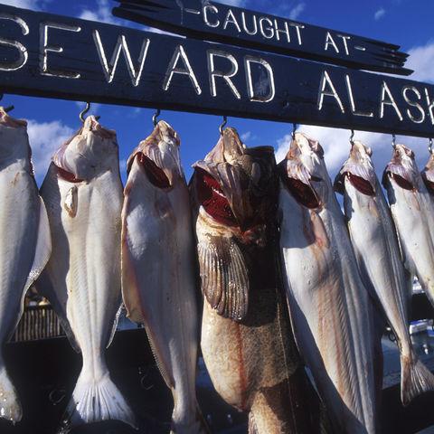 Fischfang in Seward, Alaska