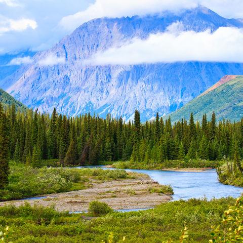 Sommerlandschaft des Denali-Nationalparks, Alaska