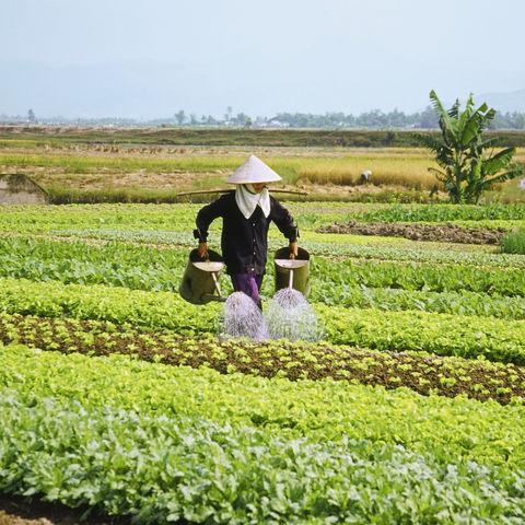 Vietnamesischer Farmer, Vietnam