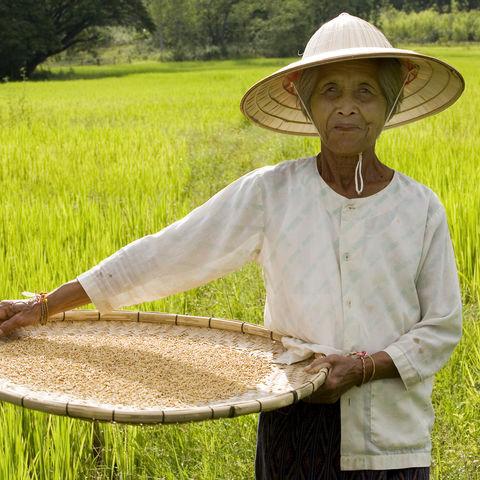 Bäuerin in Vietnam, Vietnam