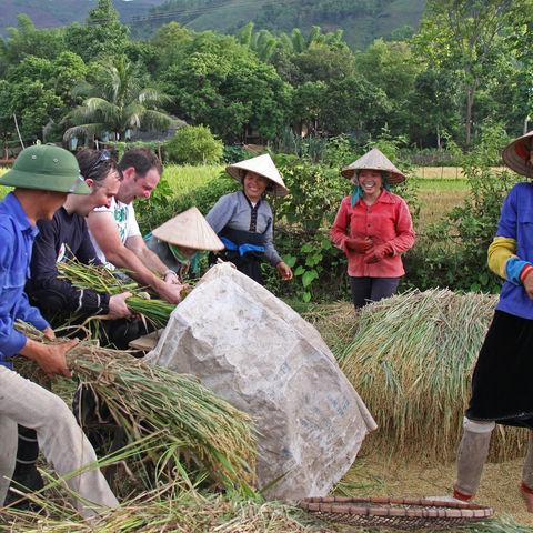 Gemeinsames Arbeiten auf dem Feld, Vietnam