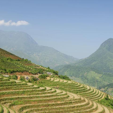 Reisterrassen in Nordvietnam, Vietnam