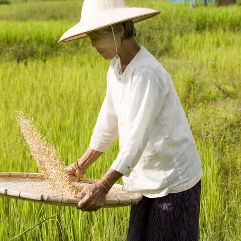 Reis sieben: Die guten ins Töpfchen, Vietnam