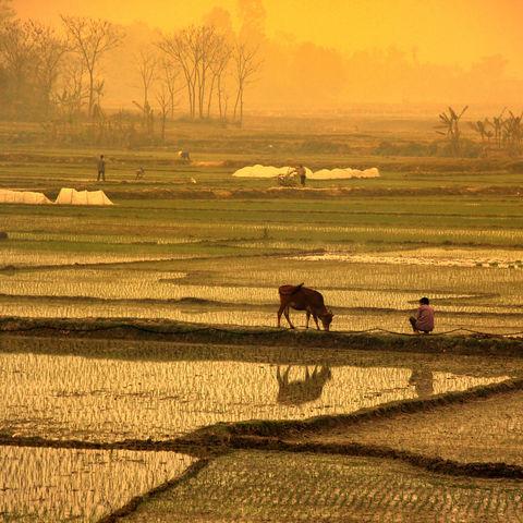 Typisch vietnamesische Reisfelder, Vietnam