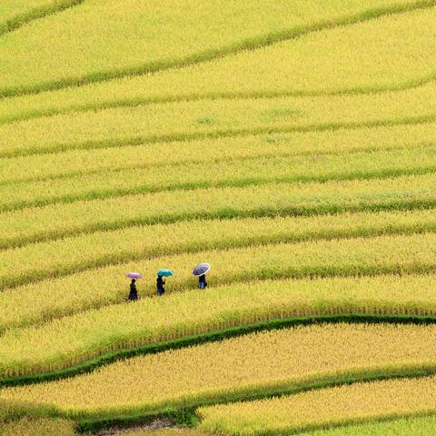 Ein paar Frauen schlendern durch Reisterrassen, Vietnam