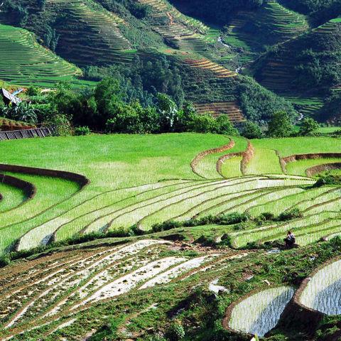 Reisfelder um Sapa, Vietnam