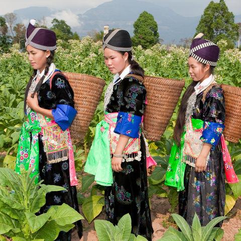 Schwarze Hmong auf dem Feld, Vietnam