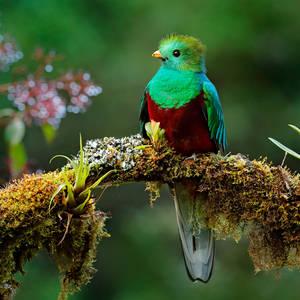 Bunter Quetzal © Ondřej Prosický, Dreamstime.com