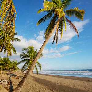Strand an der Pazifikiküste © Galyna Andrushko, Dreamstime.com