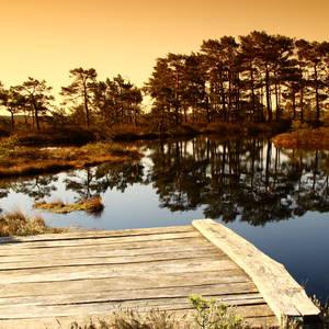 See in einer Sumpflandschaft © Risto Hunt, Dreamstime.com