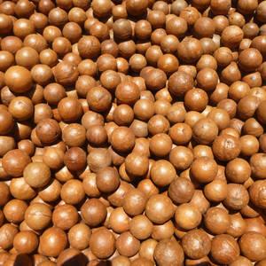 Macadamianüsse der Macadamianuss-Farm Valhalla © Romina Walther, a&e erlebnisreisen