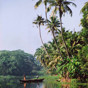 Backwaters in Kottayam © Kamini Reddy, Dreamstime.com