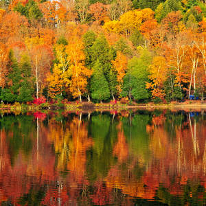 Buntes Laub spiegelt sich im ruhigen See © Elena Elisseeva, Dreamstime.com