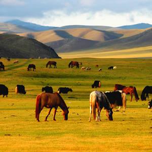 Grasende Pferde © Thinkstock, Zoonar