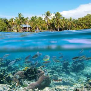 Sicht über und unter dem Wasser am Strand von Bocas del Toro © Seadam, Dreamstime.com