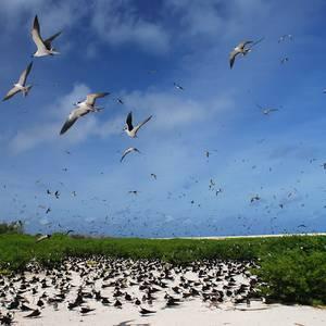 Brutstätte der Fregattvögel © FVA Seychellen, Raymond Sahuquet
