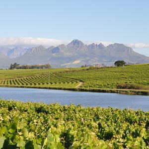 Fruchtbares Weinbaugebiet bei Stellenbosch © Bigpressphoto, Dreamstime.com