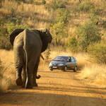 Elefant vor einem Auto im Pilanesberg Nationalpark © Mark Atkins, Dreamstime.com